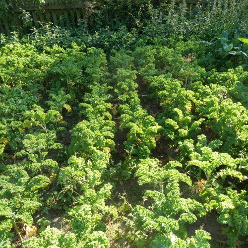 Rusza nabór odbiorców warzyw na sezon 2021 !